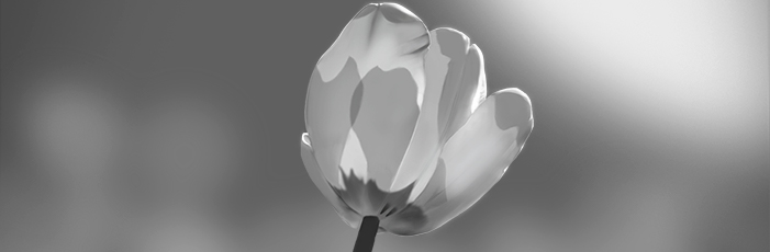 Tulip Value Study